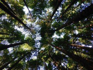 forest-park-trunks - נלי זיו